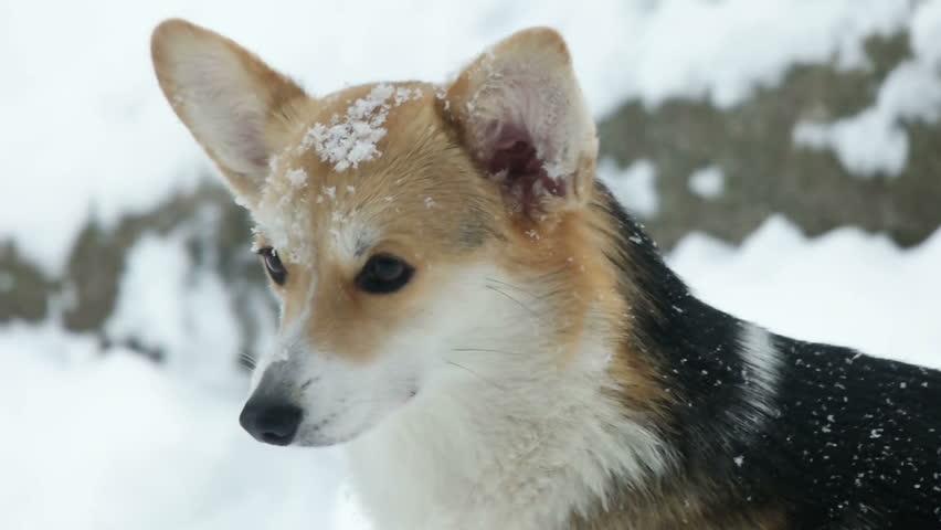 Dog muzzle | Shutterstock HD Video #23067955