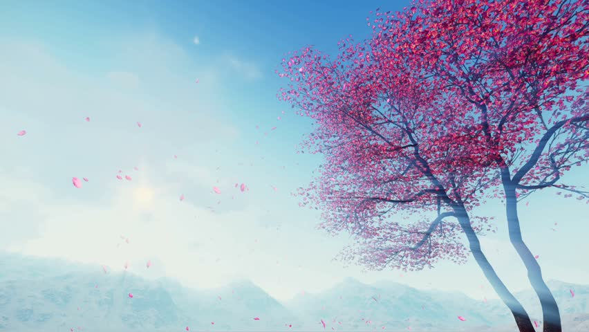 Flowering sakura cherry tree and flower petals falling from treetop in slow motion against sunny sky and foggy mountains at spring day. Realistic 3D animation rendered in 4K | Shutterstock HD Video #23262826
