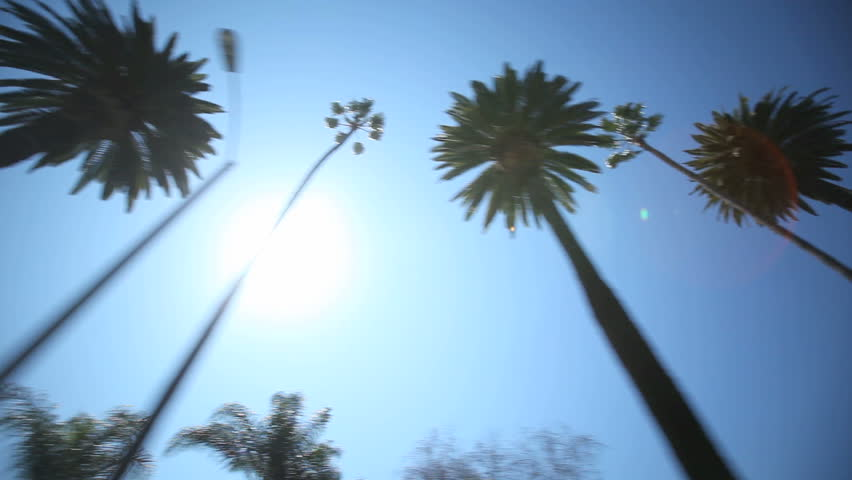 Driving through Palm Trees on Beverly Drive | Shutterstock HD Video #2372930