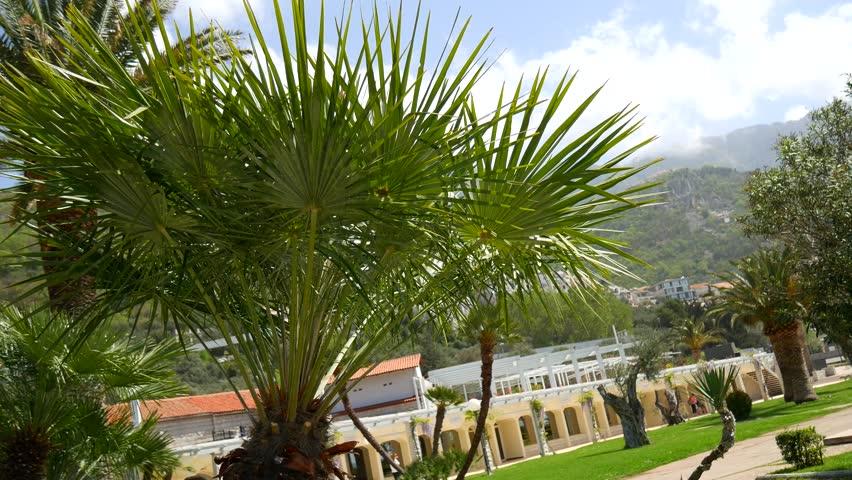 Palm Tree Top (closeup) On Sea Coast Background (Montenegro, Budva)