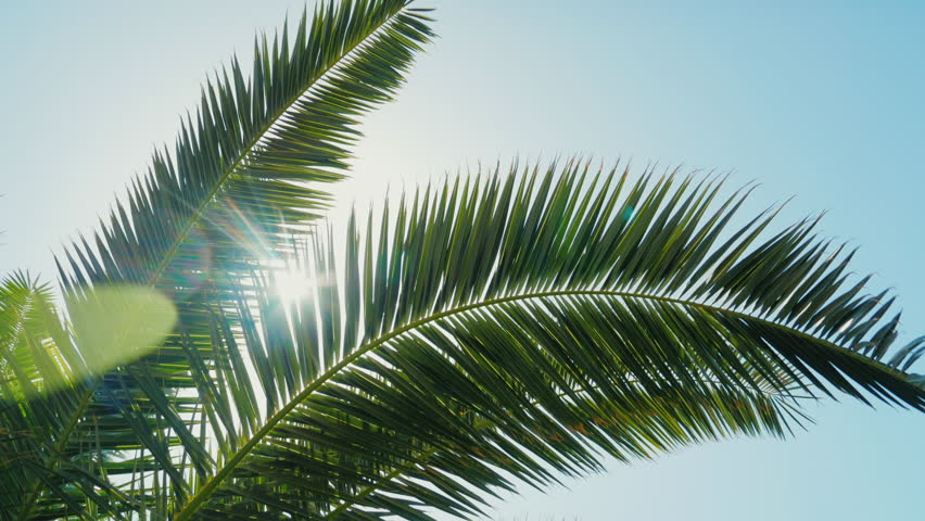 branch and palm trees essay How to identify palm trees palm trees are so named because many of them feature fan-shaped, or palmate, fronds there are over 2,600 species of palm trees, including some that can withstand temperate climates with cold winters.