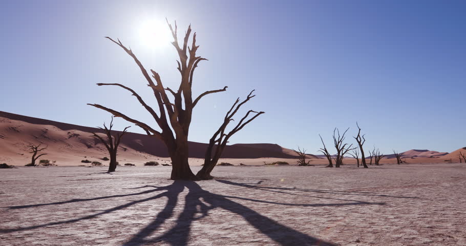 4K time lapse of tree shadow moving and sun setting behind a dead tree in the desert,Namibia | Shutterstock HD Video #26015063