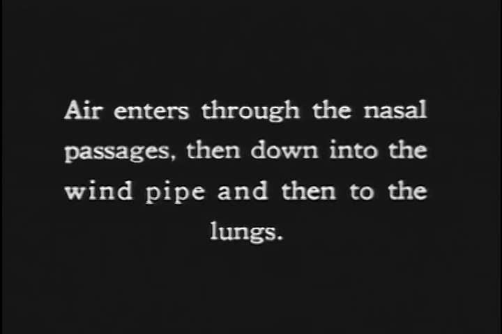 1920s: Air travels through the nasal passages, down the windpipe, to the lungs in the 1920s.
