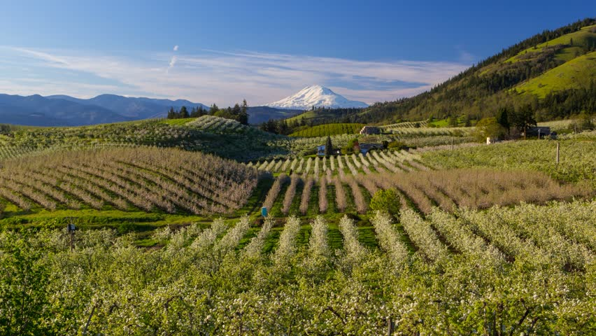 Time lapse movie of moving clouds and sky over snow covered Mt. Adams and rolling hills landscape pear orchards in Hood River Oregon spring season 4k ultra high definition uhd