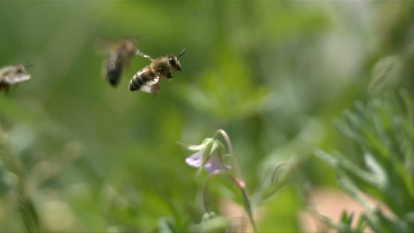 Bees fly to green plants. slow motion.