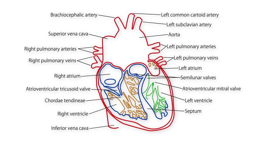 Human Heart Nature Discount Code