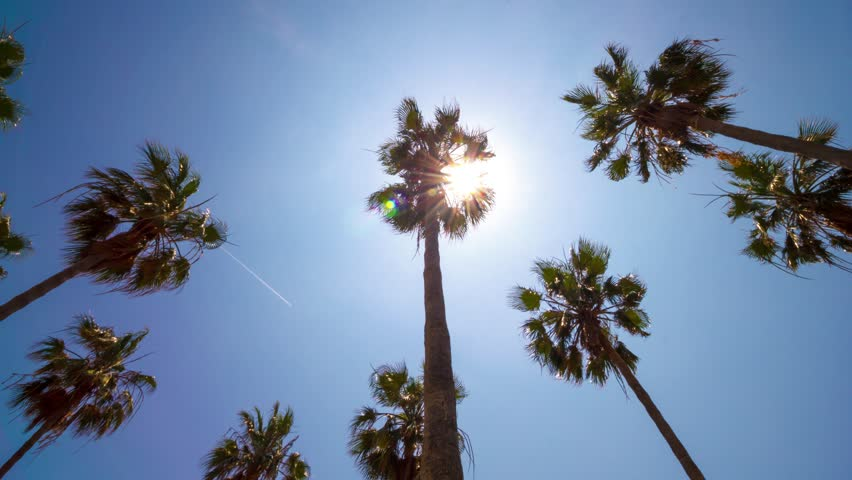 Palm trees from below on clear blue sky background. 4K time lapse. Summer sun through tree leaves and lens flare. Vacation concept. 37 | Shutterstock HD Video #26927815