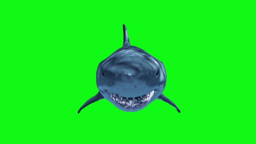 White Shark Swim Fast Loop Front Green Screen 3D Rendering Animation | Shutterstock HD Video #27019327