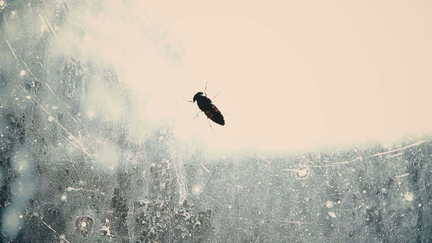 Helpless fly searching for way out from dirty glass captivity, isolated insect | Shutterstock HD Video #27548020