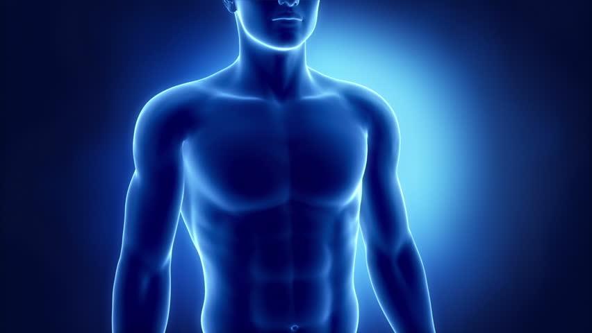 Beating human heart | Shutterstock HD Video #2757695