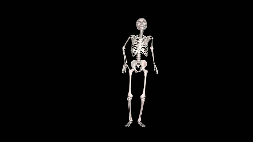 edical 3d animation of the human skeleton stock footage video, Skeleton
