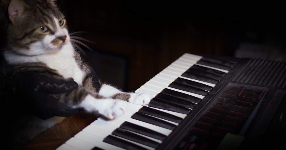A funny cat playing a piano, keyboard,  or organ.