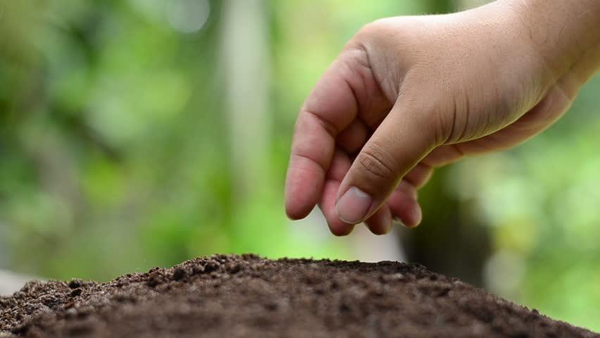 Farmer hand seeding peanut close up shoot
