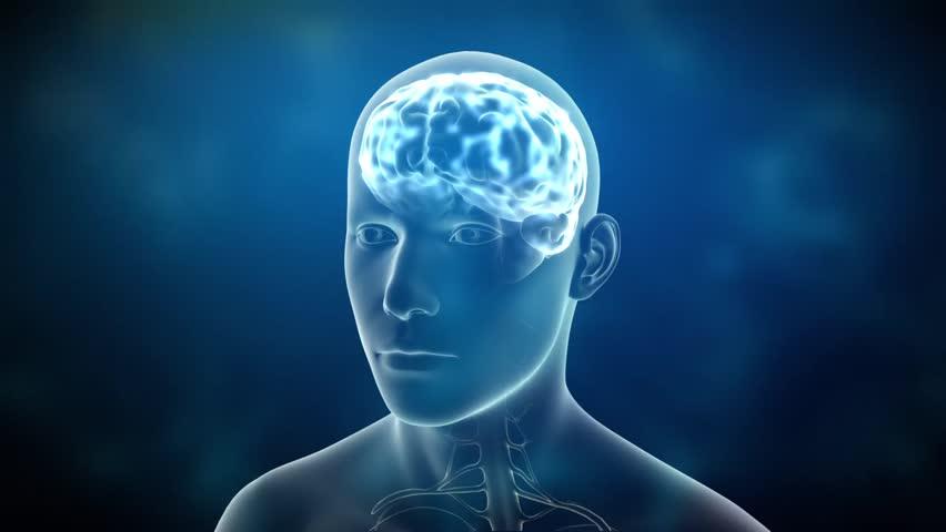 Animated human brain - photo#30