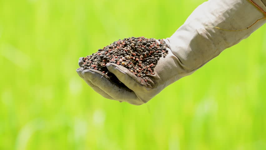 plant fertilizer is pouring on farmer hand over green background