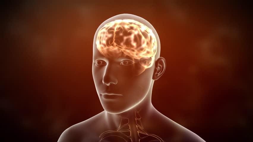 Neuronal Activity Male Red Conceptual animation showing neuronal activity in the human brain. | Shutterstock HD Video #2972854