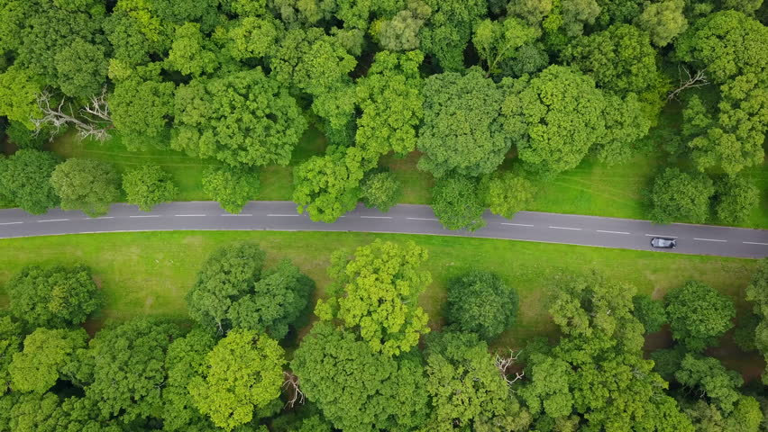 4K aerial drone footage overhead car on road through avenue of trees