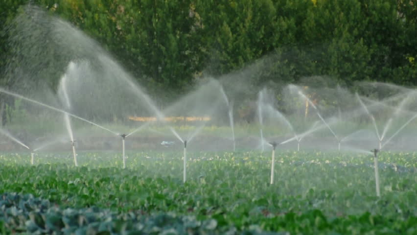 irrigation systems in a green vegetable garden hd stock video clip - Irrigation Systems