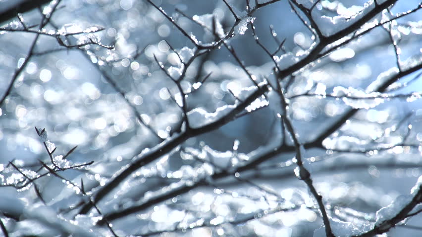 snow tree slow motion winter background
