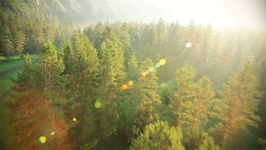 Aerial View. Flying over the beautiful sunny forest trees. Aerial camera shot. Landscape panorama. Altai, Siberia.