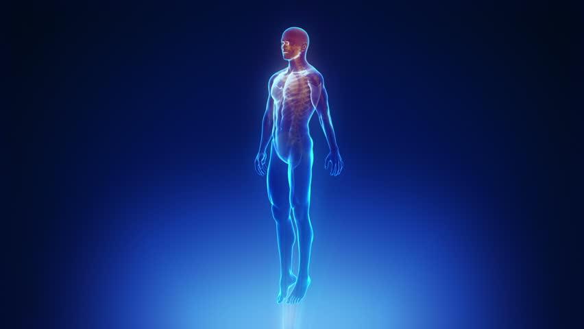 Male body scan in loop  | Shutterstock HD Video #3073045