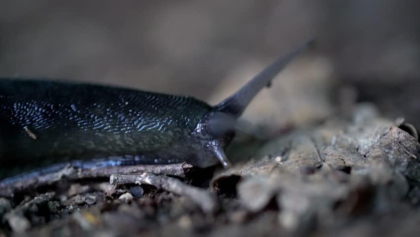 Header of Gastropoda