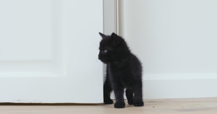 Black kitten entering a room exploring  | Shutterstock HD Video #32040817