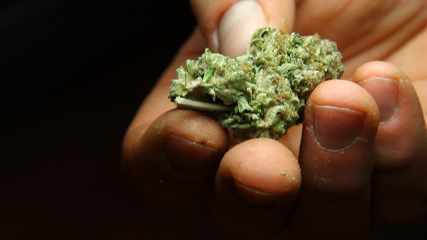 Cannabis in Hand 1. Holding and inspecting a bud of good quality marijuana.