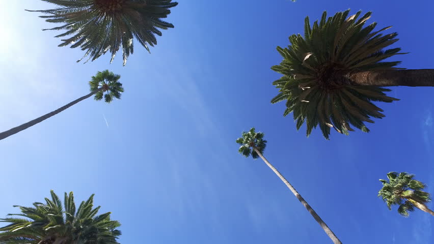 Driving through Beverly Drive. Los Angeles, California. Palm trees against a summer blue sky. United states. Blue. | Shutterstock HD Video #33217048