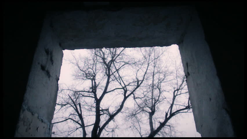 Slow dolly shot of an ominous tree.