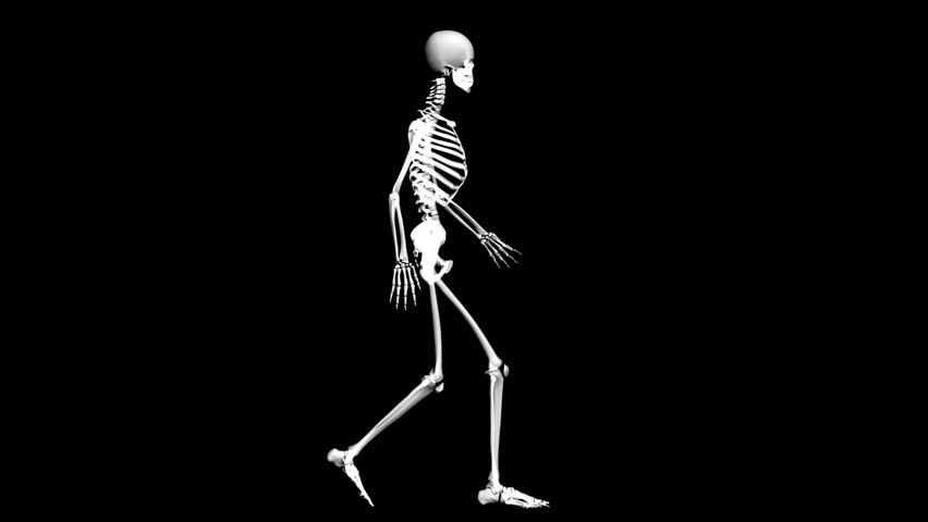 skeleton stock footage video 2989357 - shutterstock, Skeleton