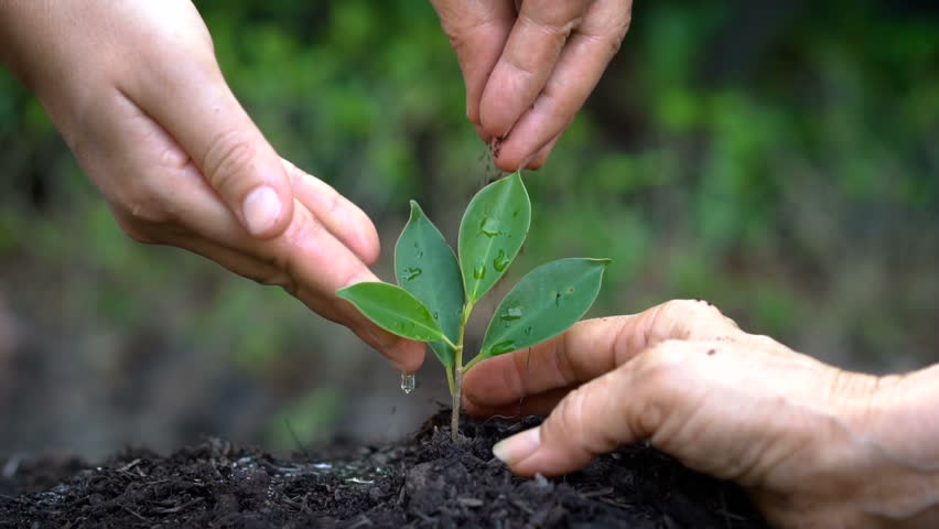taking care of the environment Respect, for environment most relevant verses psalm 24:1-2 the earth is the lord's, and all it contains, the world, and those who dwell in it for he has founded.