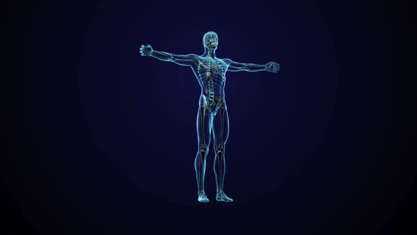 Human Anatomy Cg Video Clip Hd Footage Bigstock
