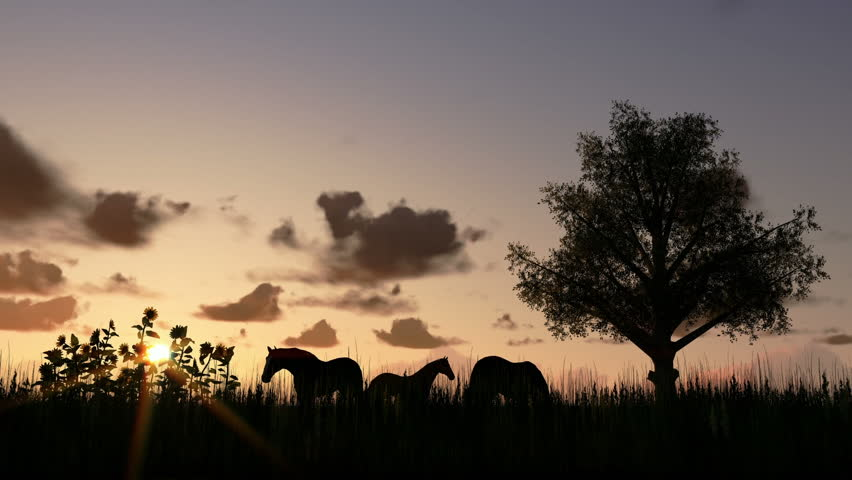Tree on meadow and horses at sunset, time lapse clouds