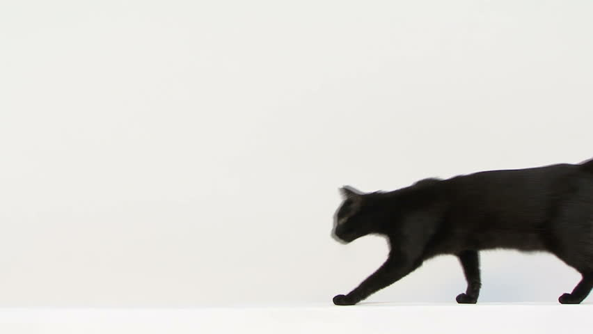 Black mixed-breed cat walking and facing the camera | Shutterstock HD Video #3828053