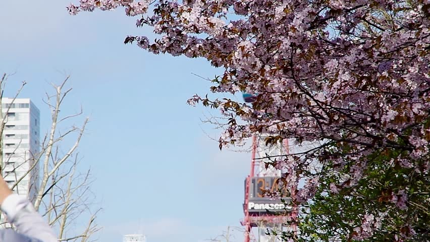 SAPPORO, JAPAN - May. 16 : Japanese Cherry blossoms and Sapporo TV Tower on May