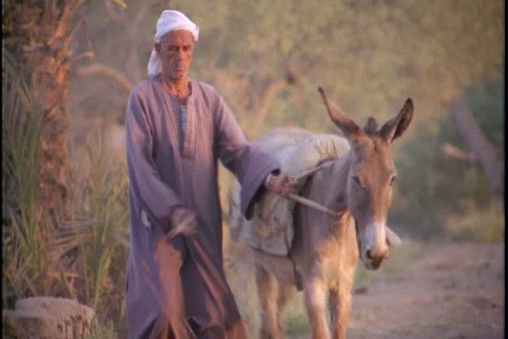 Image result for photo of leading donkey