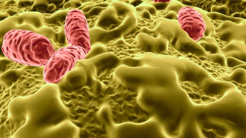 Salmonella Bacterium Stock Footage Video - Shutterstock