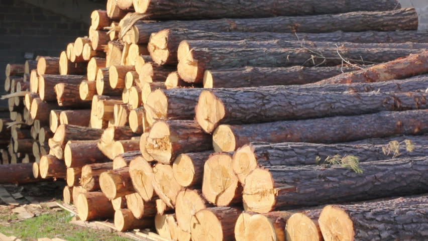 Timber wood at saw-mill and construction warehouse
