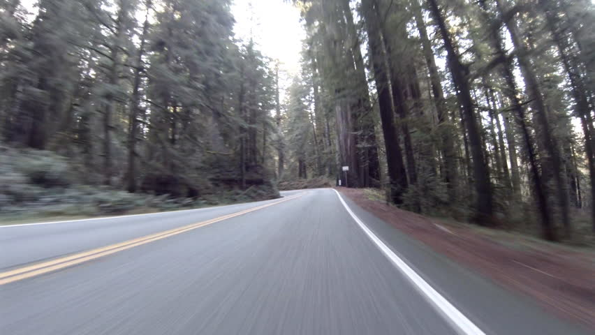 View driving through Redwood forest in California State Park on Highway 199 pov