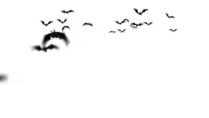 Swarm of creepy bats animation. | Shutterstock HD Video #4457837