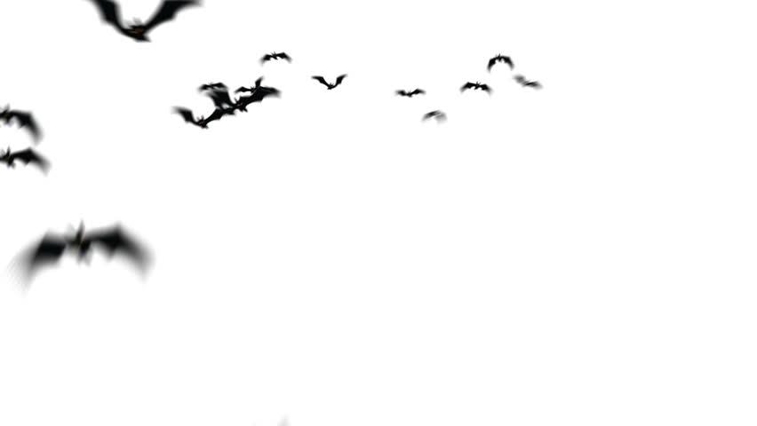 Swarm of creepy bats animation. | Shutterstock HD Video #4457846