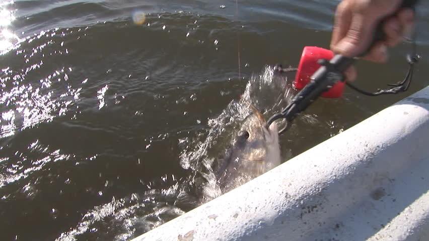 Fisherman catching Redfish in Louisiana Marsh post Hurricane Katrina