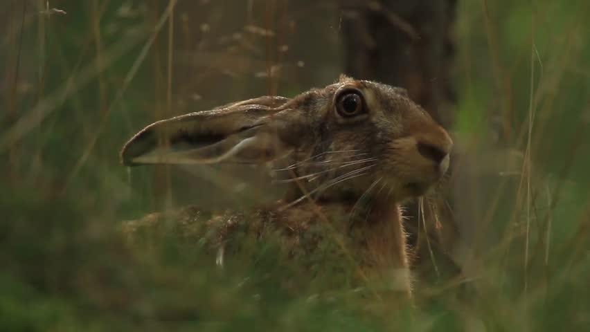 Header of hare