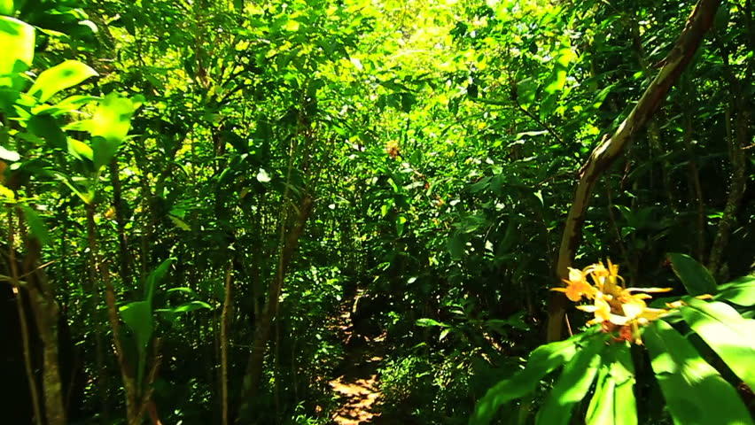 Steadicam Shot Thru Tree Forrest | Shutterstock HD Video #4576493