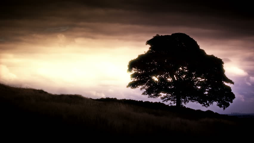 Silhouetted tree set against a dramatic sky with a Power Station in the lower right background.