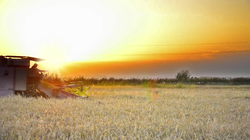 Harvesting at sunset - Stock Video. Combine collecting the crops