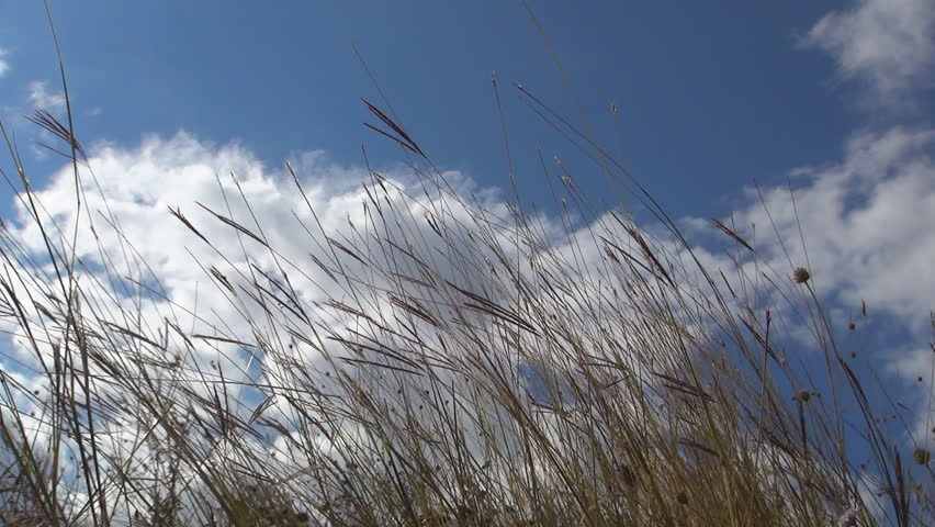 Gentle Winds Blows Through Wild Grasses Stock Footage Video ...
