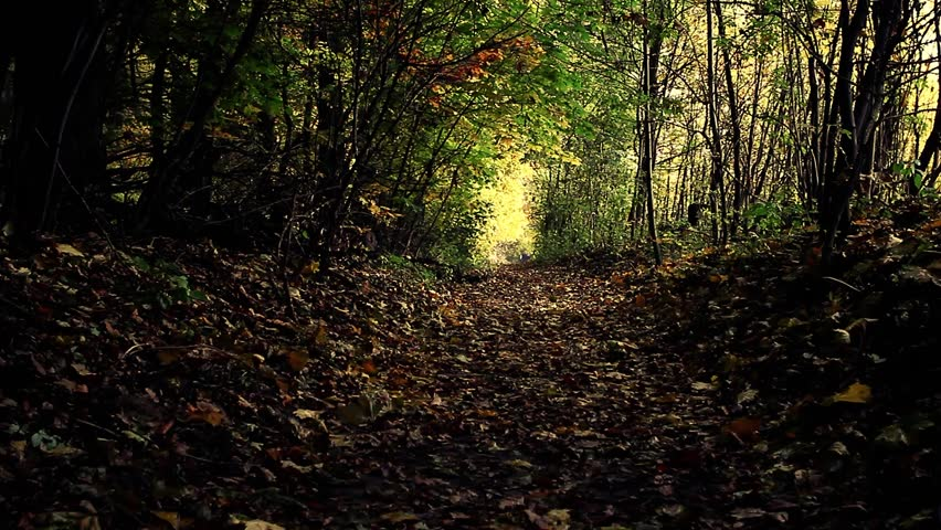 Header of Autumny