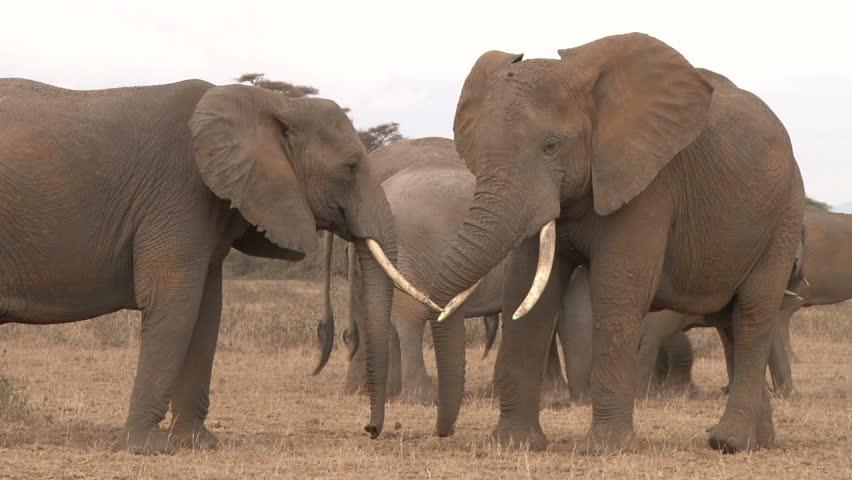 elephants in a lovely embrace
